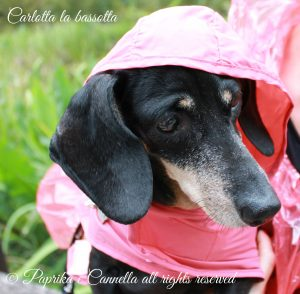 CarlottalabassottaPaprikaeCannellaBlog